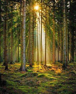 Natura uczy, wzmacnia i przywraca równowagę