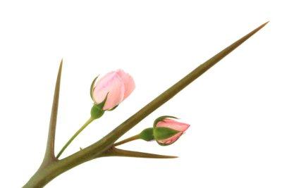 Rwa kulszowa – leczenie