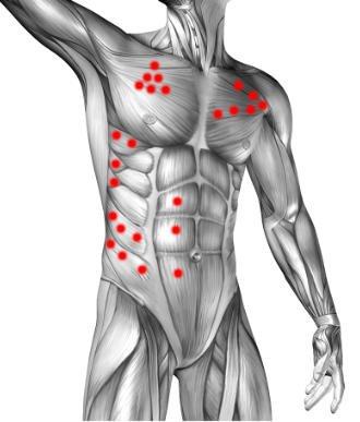 Mapa puntów spustowych: brzuch, mięśnie piersiowe